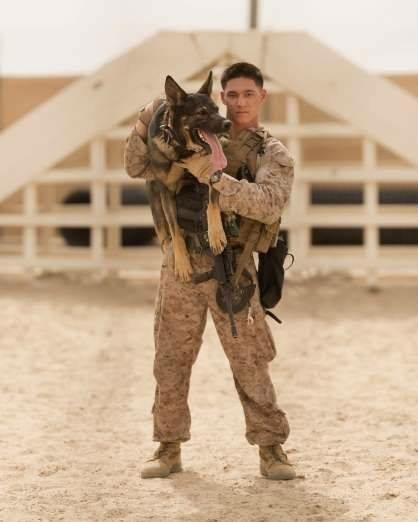 Great Service Dog