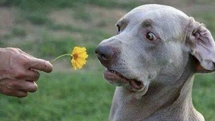 Don't Bring Me Flowers