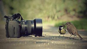 Birds On Camera