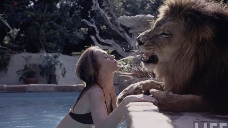 Living With Lion
