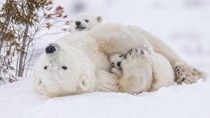 Snowy Snuggles
