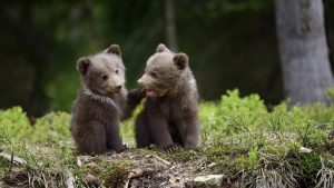 Cute Brother Bears