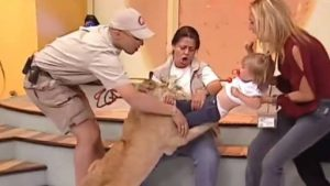 Lion Attacking A BABY On Live TV Show