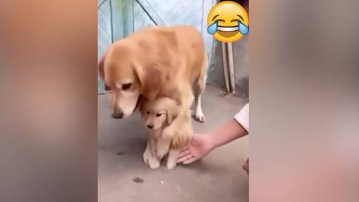 Protective Dog Prevents Puppy From Shaking Hands With Owner