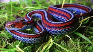 10 Weirdest Snakes Around the World