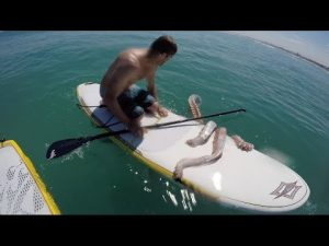 Giant Squid Wraps Its Tentacles Around A Paddle Board