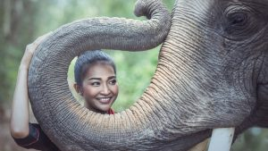 Beautiful Woman and an Elephant