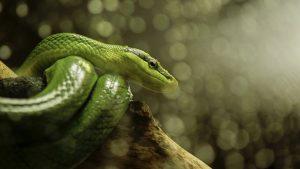 Luscious Green!