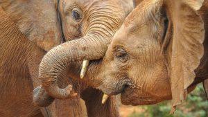 Elephant Trust