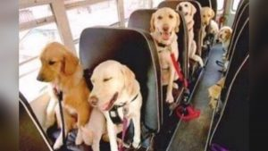 Dogs Ride The Doggie School Bus
