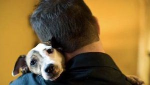 Signs Your Dog Actually Loves You