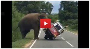 Man Tries To Hand Feed A Wild Elephant