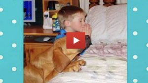 Cute Dogs Praying Before Eating