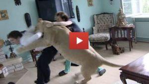 House Lion Attacks Film Crew Member