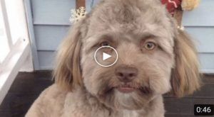 """Dog That """"Has Human A Face"""" Goes Viral"""