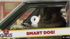[Prank] Dog Drives Car