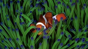 Friends and Anemones